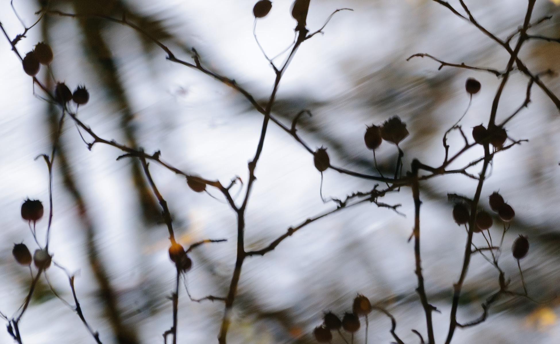 fotografie en zen