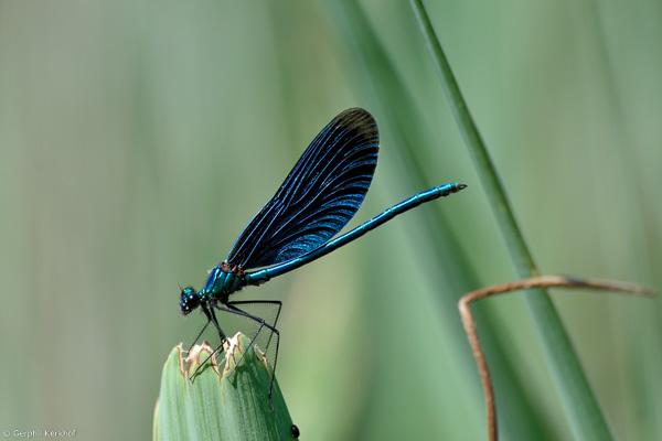 Vlinder of toch ... libelle?