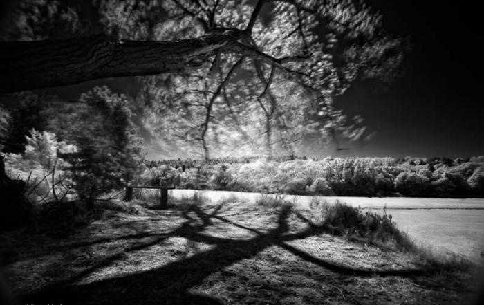 mushin - infrared image middenduin