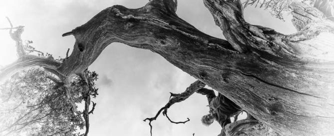 leiderschap - in burn-out of bevlogenheid?